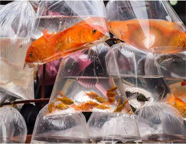 透明塑料包装袋与生活的密切关系